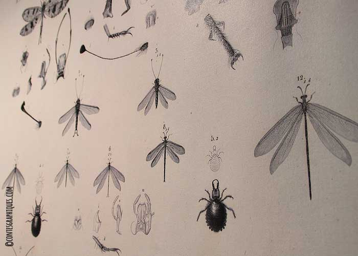 contes-graphiques-museum-03